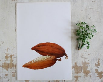 Vintage Print  - Cocoa - Book Plate  - 1965 - Gallery Wall - Unframed Botanical Art - Chocolate - Bookplate