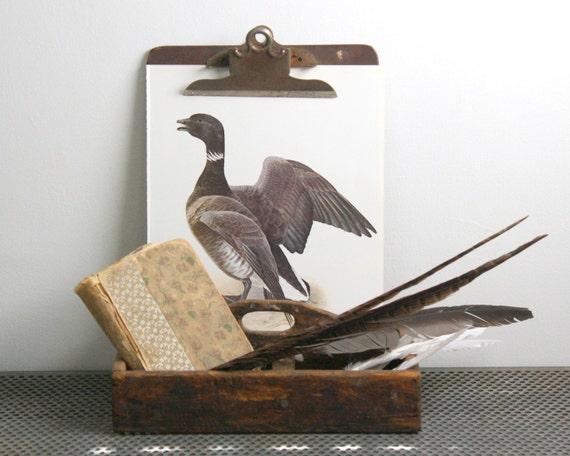 Black Brant  - Vintage Bird Plate - 1974