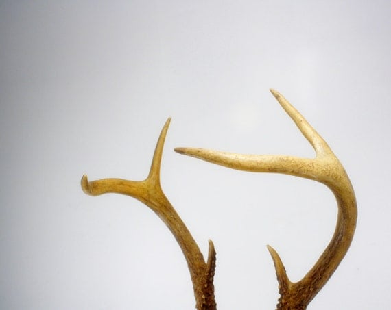 Small Vintage Antlers