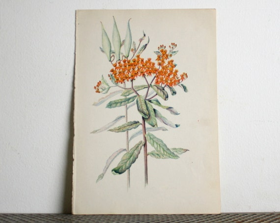 Small Vintage Botanical Flower  Print - Orange Flowers