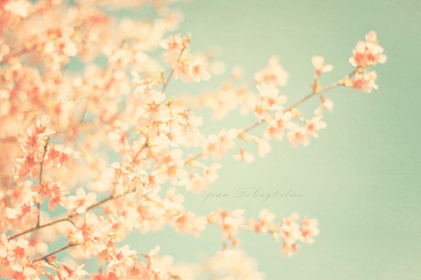Spring flowers Fine art photography cottage by JennDiGuglielmo