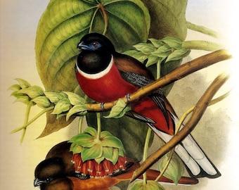 Digital Instant Download Bird Study II Malabar Trogon You Print Digital Image