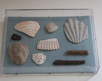 Field Study: A Selection of Sealife Fossils
