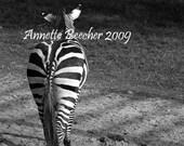 Zebra Butt - 50 percent off