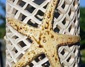 Starfish Luminary Candle Holder Hurricane Lamp