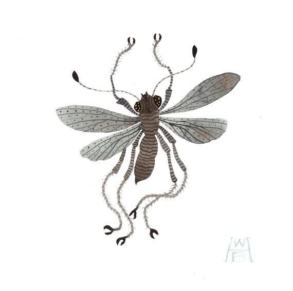 Grey Hopper insect specimen original watercolor painting