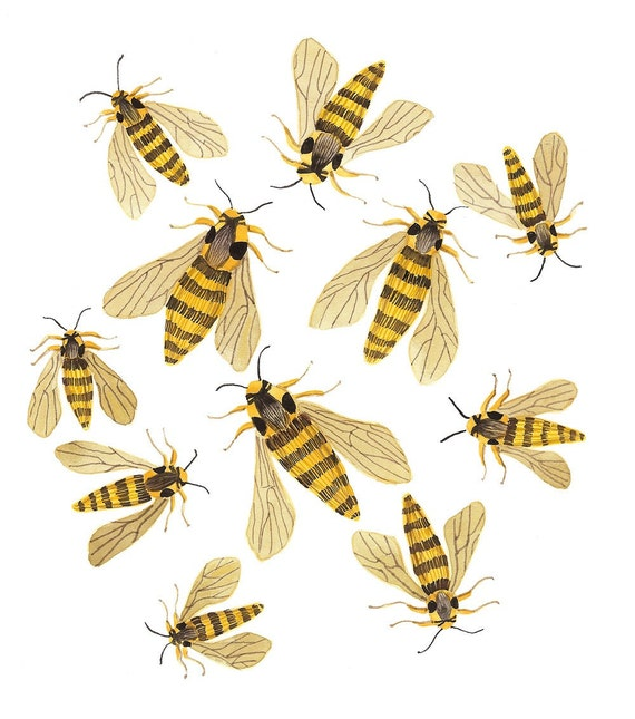 Hornet Moths original watercolor painting