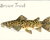 ACEO WATERCOLOR PAINTING  BROWN TROUT ORIGINAL ART