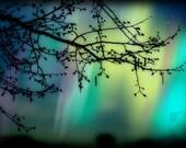 Tree Branch Silhouette Aurora Borealis 8x12 Fine Art Nature Photography Print