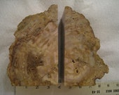 Large Petrified Wood Bookends  Display Pieces