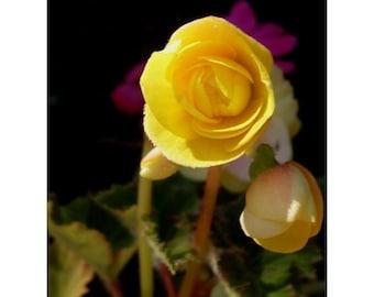 Fine Art Print * YELLOW FLOWER * Art By Rodriguez
