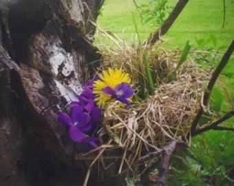 Original Art Print * BIRDS NEST With FLOWERS * Nature Print