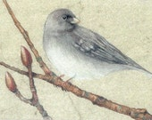 Junco Bird Art Print