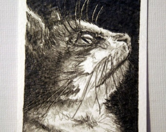 Whiskers - ACEO - Original Art Card Illustration of a Cat