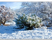 SNOW on prickly pear cactus - 8 x 12 original signed fine art photography