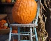 Pumpkin in a Chair 8x10 Original Photographic Print