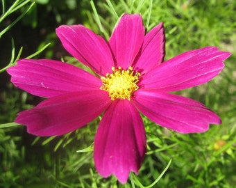 Creative Release Natural Flower Essence Remedy for Ease & Confidence with Art, Writing, Dance, Voice, Business, Soul Expression