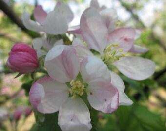 Individual Tree Flower Essence Remedy Your Choice Among Dozens of Tree Flower Essences