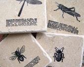 Natural Stone Coasters Insect Coasters Natural History Vintage DIctionary