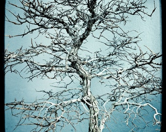 Bonsai Tree, A close up emphasizing the Abstract Patterns and Twists of the branches against an icy blue background