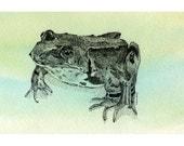 Toad Art Print, 4x6,  Frog Polliwog Amphibian, Green Blue