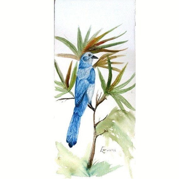 Original Watercolor Painting, Watercolor Painting Palmetto Crown, Original Watercolor Bird Painting, Watercolor Scrub Jay