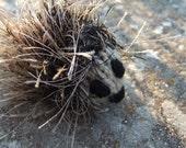 Bruno the knitted hedgehog