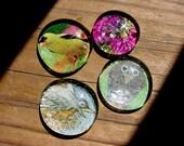 Birds garden magnets set of four