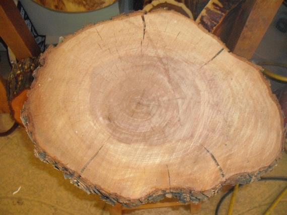 Au Natural' Bark edge Oak Log Slice for Wedding Cake stand