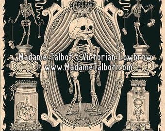 Victorian Lowbrow Anatomy Morbid Medical Museum Fetal Skeleton Poster Print