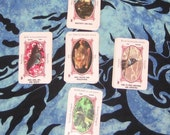 One card animal totem reading from author Lupa - reader since 1999 - spirit pagan tarot guide familiar