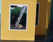 In the Garden Photo Notecards