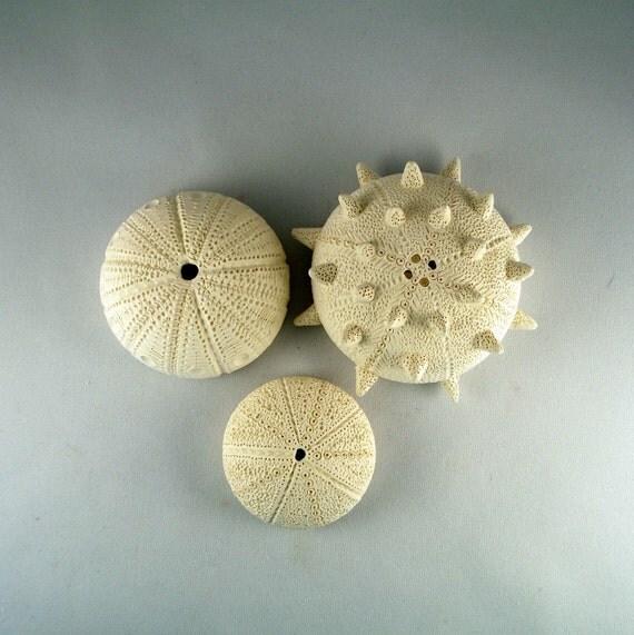 Three Sea Urchins ceramic sculpture Beach House Decor  number 2