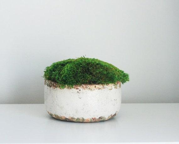 moss mound, preserved moss design