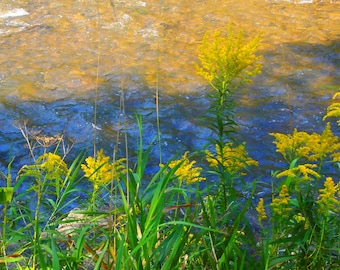 BACK TO SCHOOL Sale Photography, Wildflowers/River/Botany/Flowers for Van Gogh, 8 x 8 Print