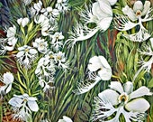 Fringed Prairie Orchids II an original watercolor
