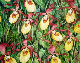 Yellow Lady Slipper Limited Edition Giclee of an original watercolor