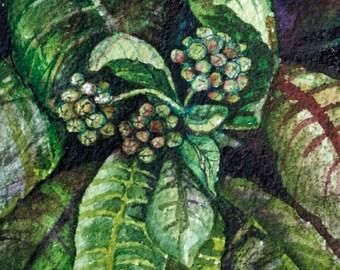Milkweed an original watercolor