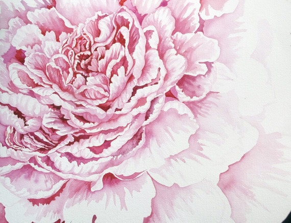 Pink Peony original watercolor painting