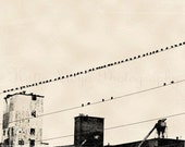 Birds on a Wire - 8x10 Fine Art Industrial Photography Print - Black and White Graphic Style Home Decor Photo