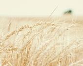 Summer Wheat Harvest - 11x14 Fine Art Landscape Photography Print - Midwest Kansas Farmer Crops Horizon Grain Country Home Decor Photo