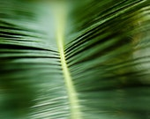Palm Frond Abstract - 5x5 Fine Art Nature Photography Print - Spring and Forest Green Botanical Leaf Home Decor