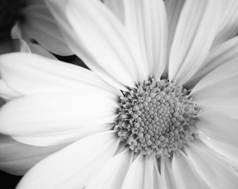 White Daisy - 20x30 Fine Art Flower Photography Print - feminine black and white floral art close up for nursery and home decor