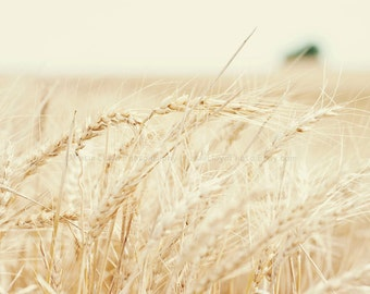 Summer Wheat Harvest - 11x14 Fine Art Landscape Photography Print - Midwest Kansas Farmer Crops Horizon Grain Country Home Decor Photo