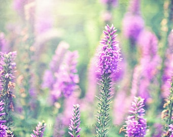 Field of Purple Liatris - 8x10 Fine Art Flower Photography Print - Spring and Easter Living Room and Bedroom Home Decor