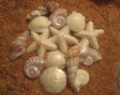 Chocolate Candy Sea Shells Seashells Nautical  Assortment 30  Sea Shells Cake Decorations