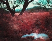Desert Grasses In Winter, 8x10 Photography Print