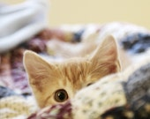 Cute Ginger Kitten Photo Print Sneak Attack, 8x8 Square - Stripey Little Cat