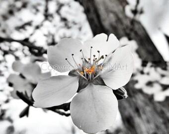 Almond blossom - fine art photograph, dreamy wall art spring summer happy inspirational selective color office home decor sakura flower tree