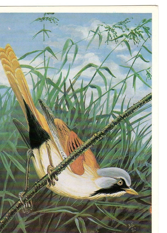 Russian  postcard Bird